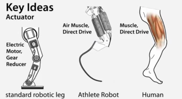 MuskelRoboter